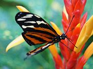 蝴蝶图片唯美绚丽