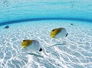 美丽的马尔代夫迷人海底高清壁纸