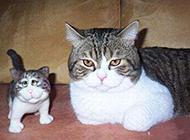 大脸猫搞笑图之一定不是亲生的