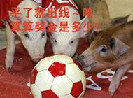 爆笑:猪肉涨价后