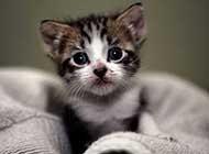 超可爱灵气的小猫咪图片