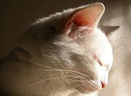 世界超萌名猫高清壁纸欣赏