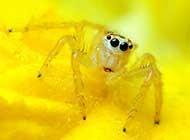 小小的弗氏纽蛛昆虫桌面高清壁纸