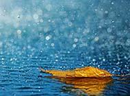 夏日风雨飘摇唯美桌面高清壁纸