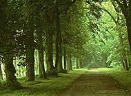 宁静的道路美景图片