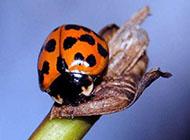 聪明的小昆虫高清动物图片