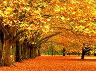 飘落的落叶图片