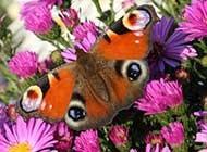 可爱小动物高清纪实摄影图