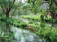 林间小溪绿色风景图片