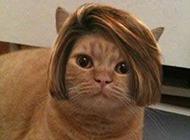 动物囧图搞笑发型图片