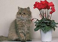 机灵敏捷的猫摄影图片