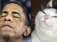 盘点长着明星脸的猫咪搞笑图片