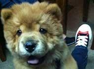人类最忠实的朋友-狗狗