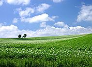 蔚蓝天空青葱平原护眼风景图片