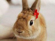二货兔子图片表情萌
