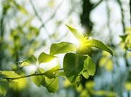 绿色植物风景图片清新迷人