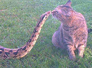 动物恶搞图片之甜蜜的亲吻