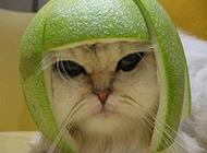 猫咪的新发型