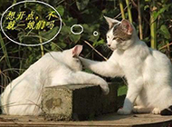 猫咪图片恶搞爆笑文字图