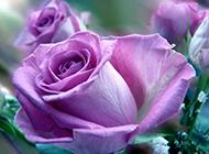 唯美清新紫色花瓣风景图片素材