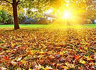 清晨冉冉升起的太阳图片