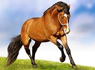 绿色草原骏马自由奔跑图片
