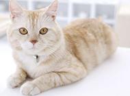 可爱慵懒的小猫咪独照