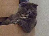 猫咪搞笑图片笑死人之主人是智障