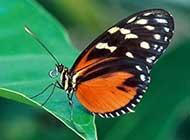 色彩斑斓的蝴蝶桌面高清壁纸