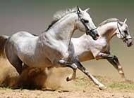 帅气飞奔的骏马高清图集