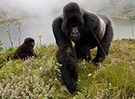与大自然和平相处的动物高清图片