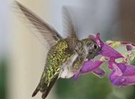 小巧玲珑的蜂鸟桌面高清壁纸