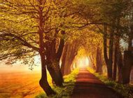 秋天森林美景高清桌面壁纸