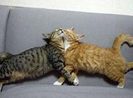 猫咪爆笑趣图之好幸福的一对