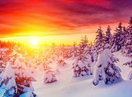 冬天森林公园唯美白色雪景图片
