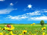 小清新风景唯美阳光图片壁纸