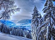 魅力无穷的森林雪景精美壁纸