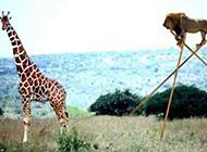 最新动物搞笑ps图片