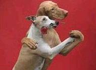 动物恶搞图片大全之好优美的舞姿