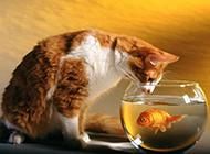 机灵任性的猫咪高清图片