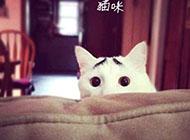 逗趣猫咪精美可爱搞怪表情集锦