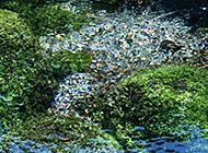 绿意盎然的清澈小溪流特写