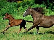 在草原上奔驰的骏马