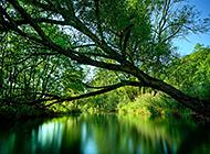 新西兰郊区野外绿色风景图片
