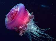 缤纷深海唯美意境风景图集