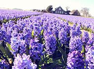 唯美植物花卉美景壁纸欣赏