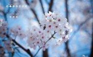 2012年历樱花美景清晰图片赏析