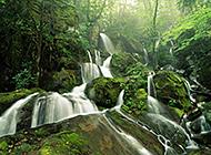 生机盎然的自然美景图片