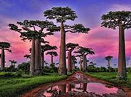 树林晚霞美景精美壁纸