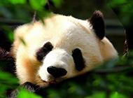 神气可爱动物摄影壁纸